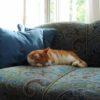 Kass tigudiivanil - Atmosfäär - renoveeritud mööbel