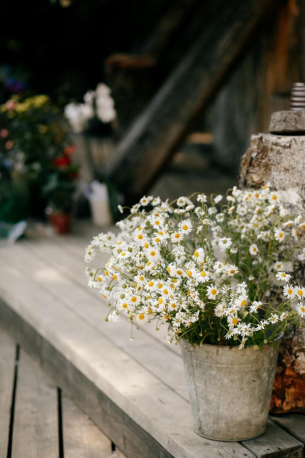 Lilled ämbris (Foto Alexey Kochetovsky)